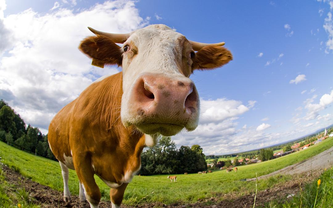 Fragen der Digitalisierung in der Landwirtschaft (Foto: RCsolutions – stock.adobe.com)